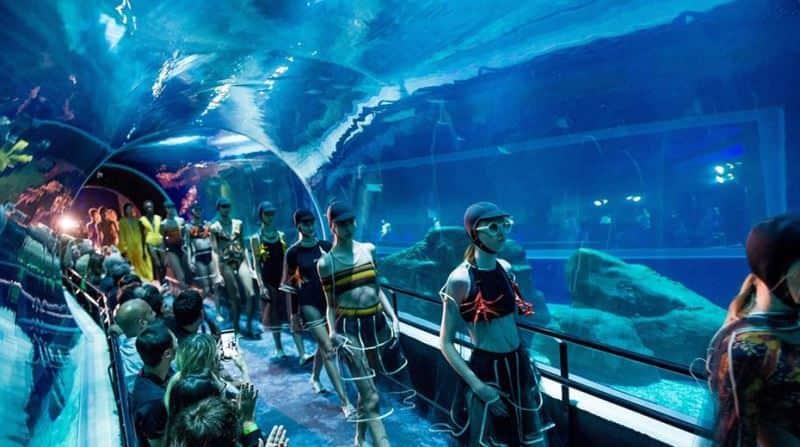 How Long To Tour Georgia Aquarium